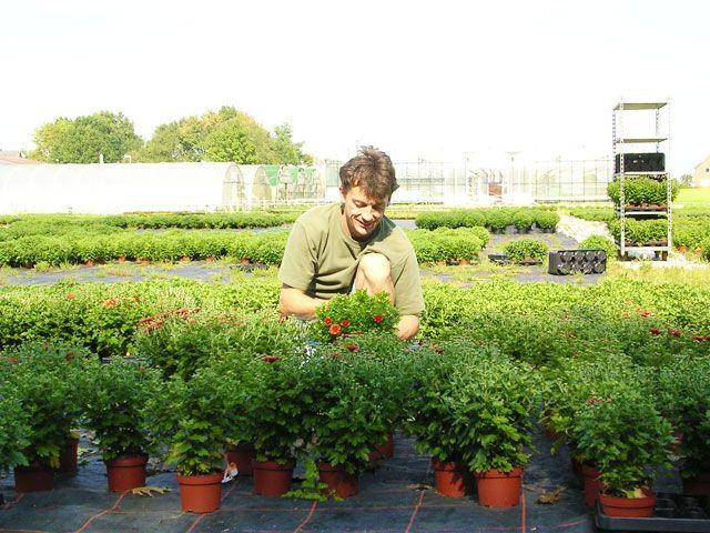 Gärtnerei Meyer in Syke – Herbstpflanzen für Garten und Balkon